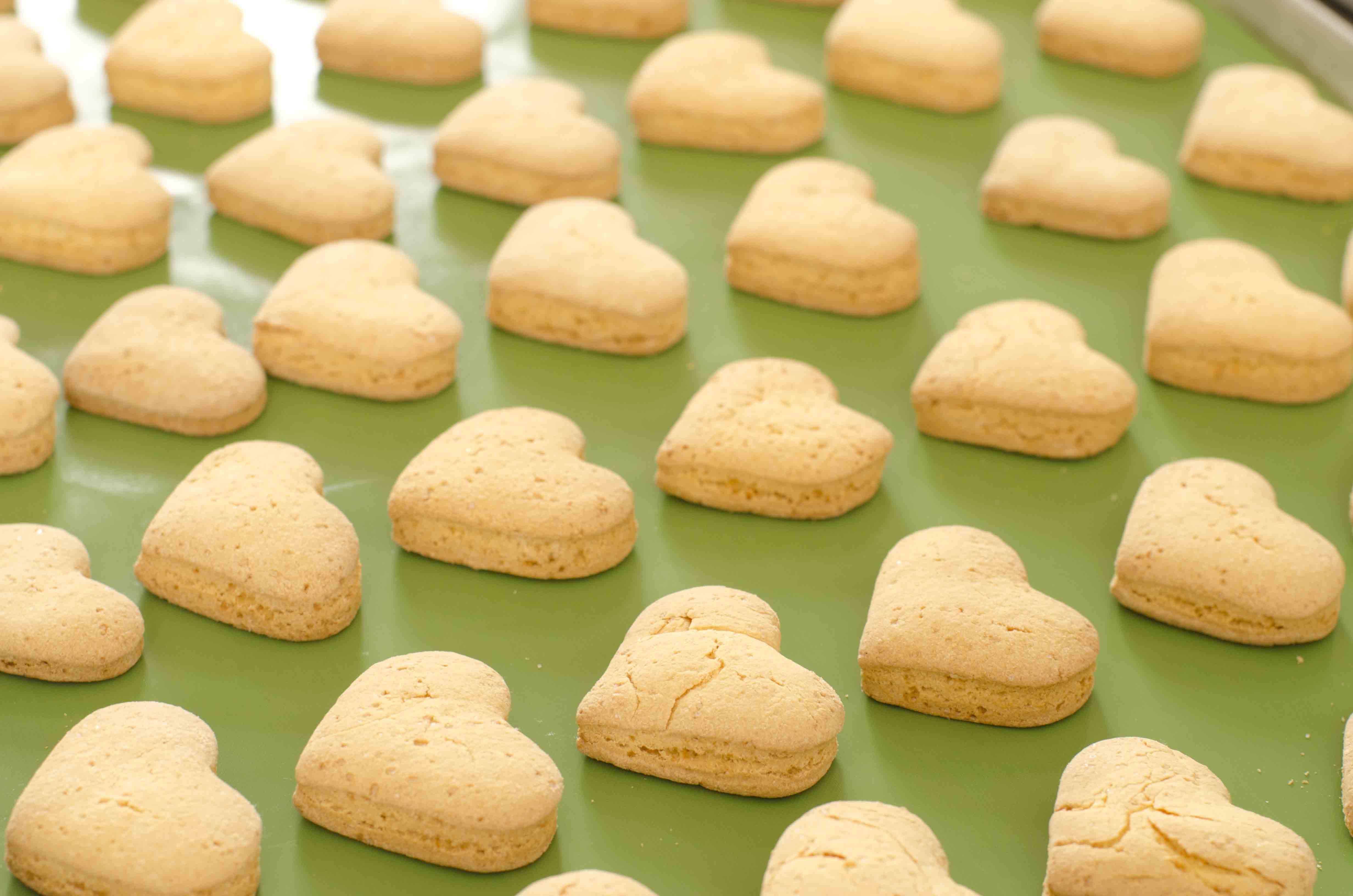 produzione artigianale prodotti da forno senza glutine | fv