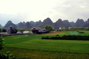 risaie coltvazione riso Oriente